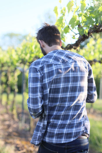 Casual Clothing Day Field Focus On Foreground Freshness Growth Leisure Activity Lifestyles Men Nature One Person Outdoors People Real People Rear View Standing Tree Vine Vineyard Wine