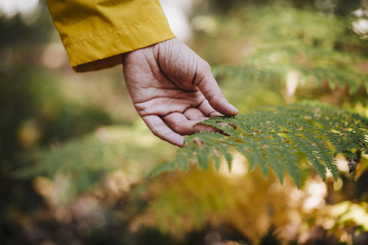 Close-up of person hand holding plant on field