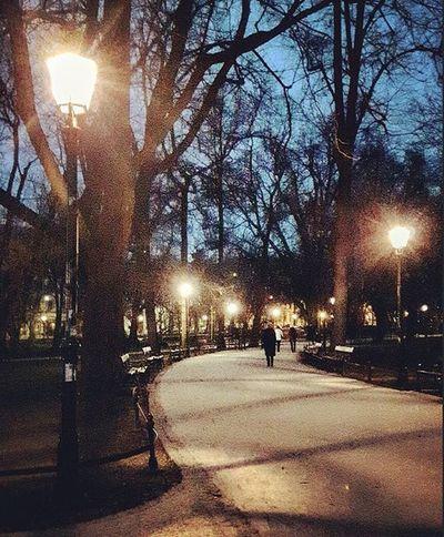 Cracow Street Lamplight Pavement People Trees Blue Sky Evening Krakow Ulica Chodnik Ludzie Drzewa Niebieski Niebo Wieczor