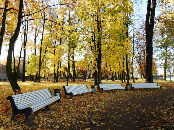 Garden Of Lopuhina Tree Day Autumn Nature Sky Beauty In Nature Benches Autumn🍁🍁🍁 EyeEmNewHere Colors Of Autumn Autumn North Landscape Fifty Shades Of Yellow Park Colors Of Sankt-Peterburg Sankt-Petersburg Russia