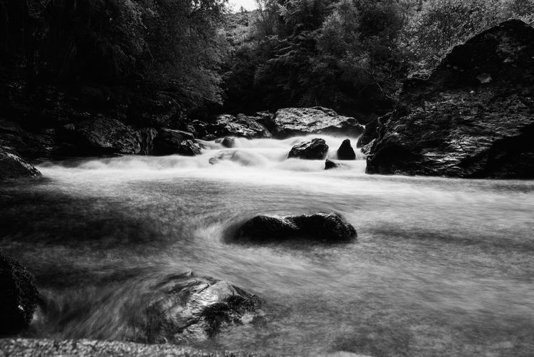 The river Falloch Water Tree Nature Scenics - Nature Rock No People Long Exposure Flowing Water Waterfall Day Plant Motion Beauty In Nature Solid Rock - Object Blurred Motion Land Flowing Forest Outdoors
