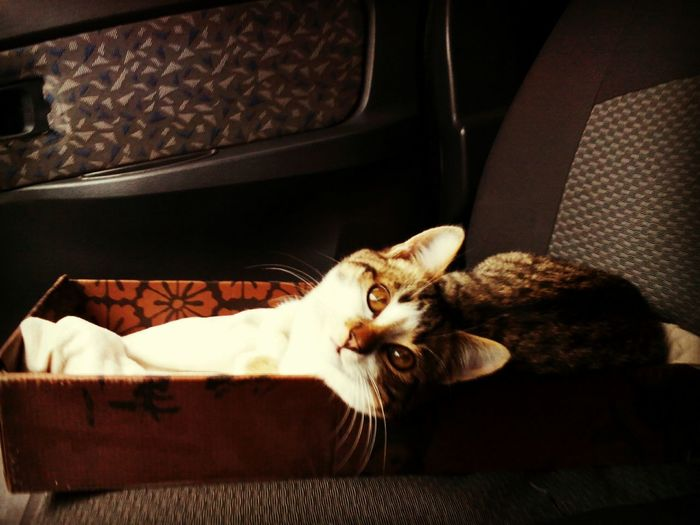Cat Car Whisker Day Basya Colors