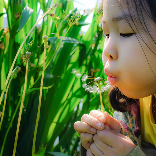 a female child blowing dandalion seeds holing in hands Children's Portraits Blowing Dandalion Seeds Child Child Photography Childhood Childhood Memories Children Photography Childrenphoto Close-up Cute Dandalion Seeds Dandalli Day Girl Portrait Girls Green Color Growth Headshot Lifestyles Nature One Person Outdoors Real People Side View