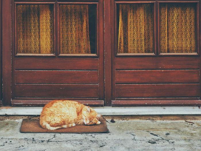 Brown cat sleeping on doormat against house