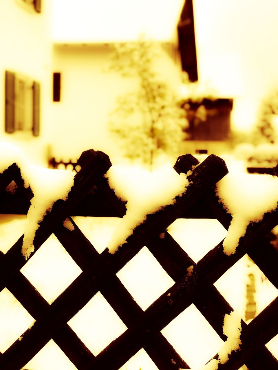 no people, focus on foreground, winter, close-up, snow, outdoors, nature, day, animal themes, mammal, sky