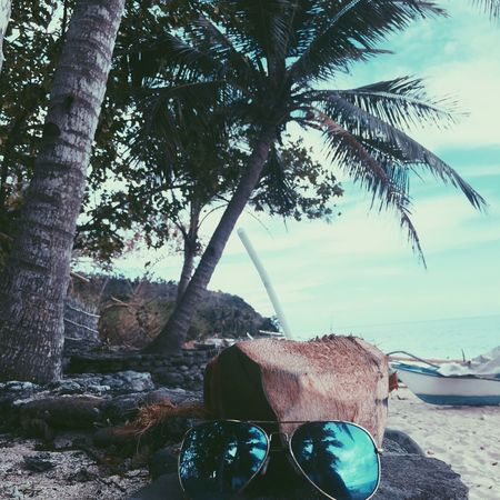 Tree Beach Sea Nature No People Day Outdoors Palm Tree Tree Trunk Water Scenics Beauty In Nature Sky Sunnies Sunniesph