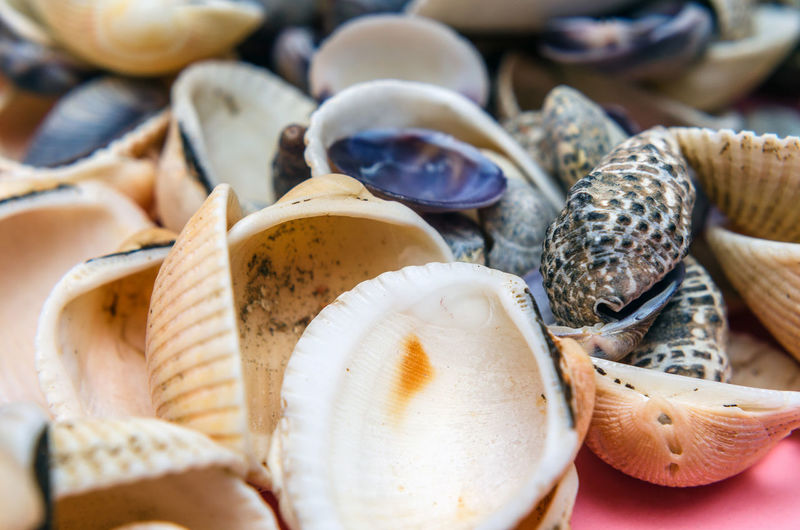Collection of seashells on pink background
