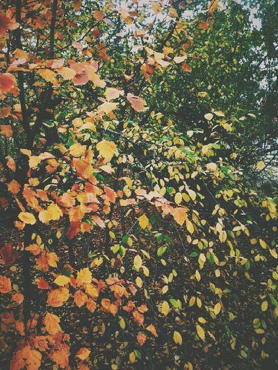 Autum ♥ Colours Of Autum The Beauty Of Autum Autum Leaves