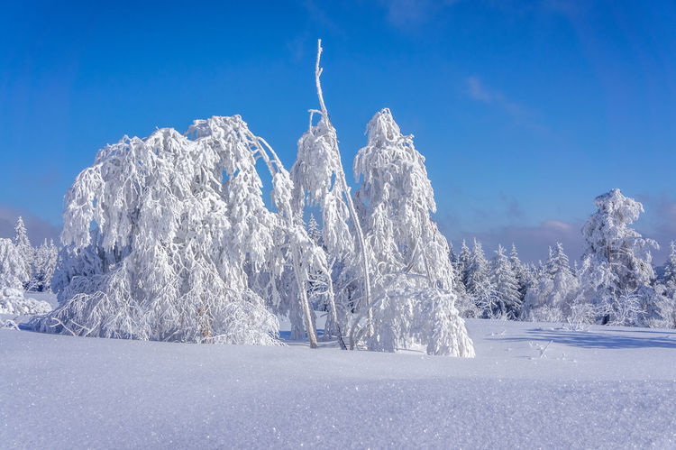 Sauerland Nature Sauerland Winter Wintertime Beauty In Nature Cold Temperature Day Landscape Nature No People Outdoors Ski Sky Snow Sport Tranquility Tree Winter
