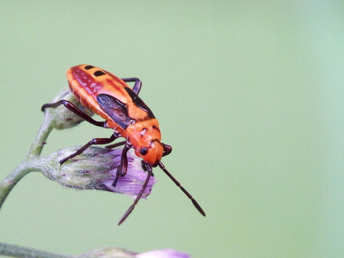 Macro Photography Insect Photography Insects  Macro Macro Nature