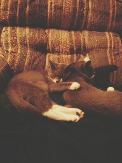 Oh. My. God. Catstagram Cats Cute
