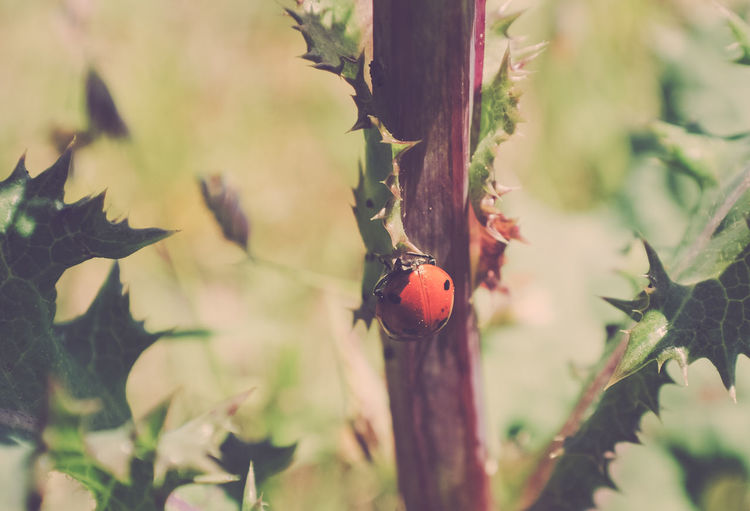 Beauty In Nature Close-up Growth Ladybug Leaf Nature No People Outdoors Plant