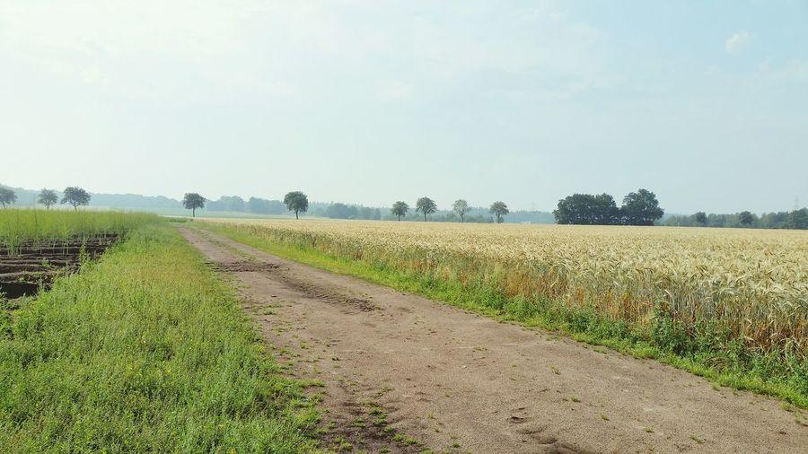 Dirt road on grassy field against sky