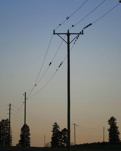 The wires. Sunset Springtime Fjärdhundraland Birds EyeEm Nature Lover Eye Bird Telephone Line Tree Technology Electricity Pylon Sunset Electricity  Cable Telephone Pole