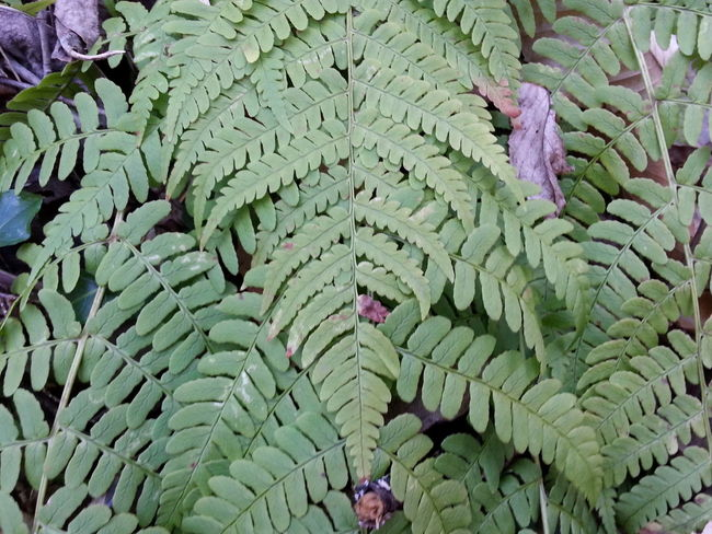 Green Color Leaf Plant Outdoors No People Day Fern Beauty In Nature Close-up