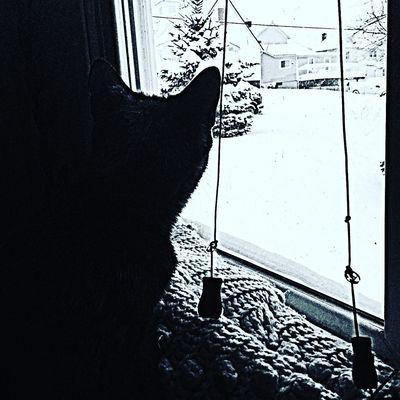 Snow ❄ Cats Marietta Weather