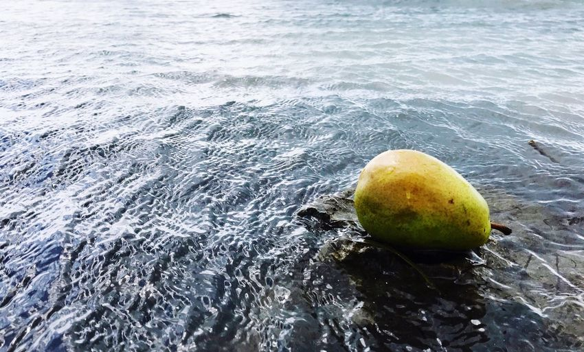 Pear In The Ocean Day Outdoors No People Shore Beauty In Nature Water Beach at Sombrero Beach, Marathon, FL USA The Week On EyeEm Art Is Everywhere Break The Mold The Great Outdoors - 2017 EyeEm Awards Visual Feast Paint The Town Yellow