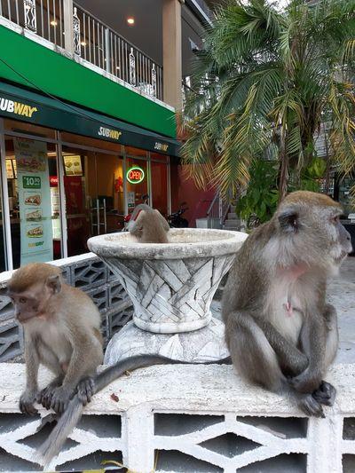 Animals Monkeys