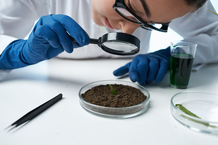 Cropped hand of boy examining plant at laboratory