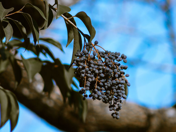 Low angle view of fruits