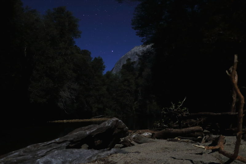Starry night By Night River Driftwood Chile La Junta Nightphotography Night Lights Night Sky Peaceful Freedom Montains    Astronomy Tree Star - Space Mountain Clear Sky Milky Way Moon Long Exposure Pinaceae Mystery Space And Astronomy
