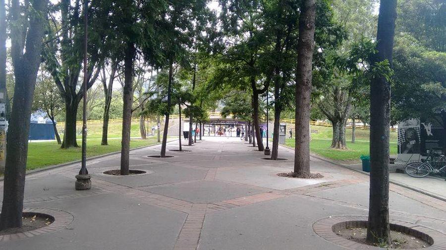 Bogota,colombia. University University Campus Universidad Universidad Nacional De Colombia UniversidadNacionaldeColombia Arboles , Naturaleza Av NQs