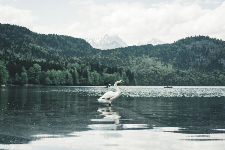 View of bird in lake against mountains