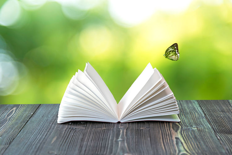 Close-up of butterfly on book