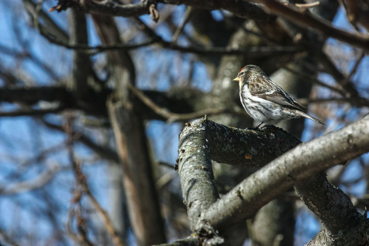 Animal Themes Animal Wildlife Animals In The Wild Bare Tree Beauty In Nature Bird Branch Close-up Day Focus On Foreground Low Angle View Nature No People One Animal Outdoors Perching Tree