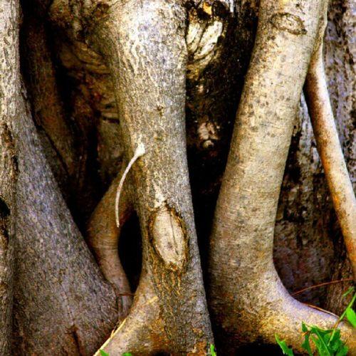 Woodenworks Instagold Instawood Instagramer instaworld instatalent instagrapher instabeauty instatree tree maldives instamaldives instaculture instagramhub instamv instahunt photocontest photoaday photograpgyoftheday woodcraftart woodart craftart