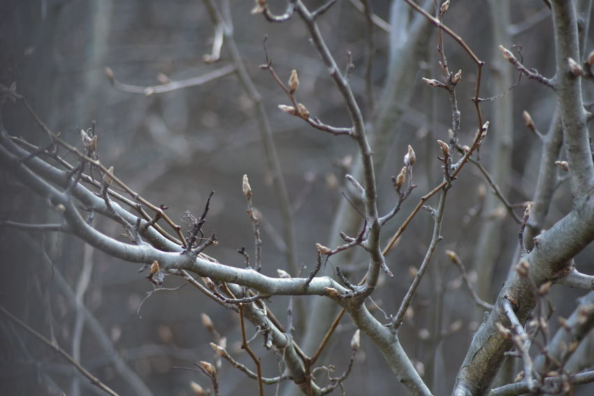 just tried a little close up Branch Close-up Growing Journalcx Nikond7200 Plant Selective Focus Twig