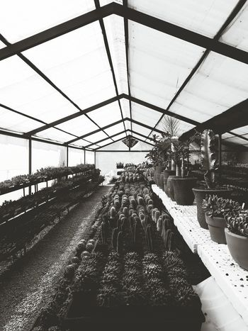 || Perspective. || Architecture Indoors  Plant Nature Greenhouse EyeEm EyeEmNewHere Beauty In Nature Cactus Paradise Cactusplants Plants Succulents Cactus Garden Cactuslover Cactus Flower Growth Blackandwhite Black & White Monochrome BwBw_collection Monochromatic Blackandwhite Photography Life Perspective Perspective Photography Lines Shapes Perspectives Greenhouses Ajijic Jalisco, México Vivero Viveros Mexico_maravilloso Mexico De Mis Amores Mexico <3 Mexico Y Su Naturaleza