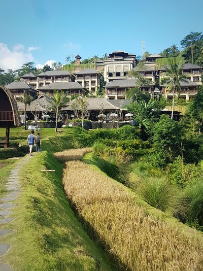 Travel Destinations Tourism Travel Architecture Building Exterior Sky Outdoors Vacations Nature INDONESIA Travel Photography Bali, Indonesia Bali Padi Field Pathway Walk Holiday People Day Travel Tropical Climate Tranquility Hiddenparadise Hotels And Resorts Ritz-Carlton Hotel Waiting Game