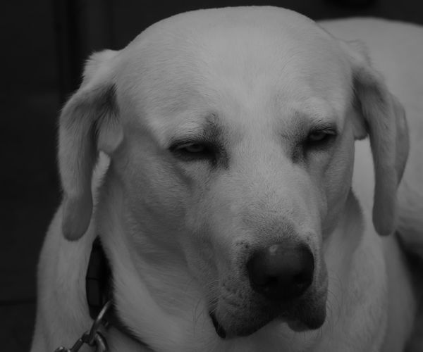 Observes Snapshots Of Life Animal Photography Animal Themes Best Friend Black White Fotogrphie Dog Interested Look No People Pentax Pets Portrait View Direction White Dog