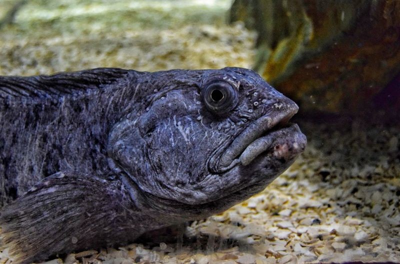 Thought I would take a selfie, hey I'm joking, even I'm not as ugly as this fish. It's a close run thing though 😩 Taking Photos Beauty In Nature EyeEm Nature Lover The Lake District  Malephotographerofthemonth Always Taking Photos Sea Life Aquarium Maryport Fish Ugly Fish