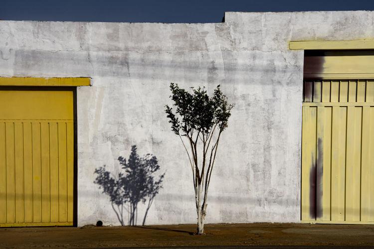 Tree against building