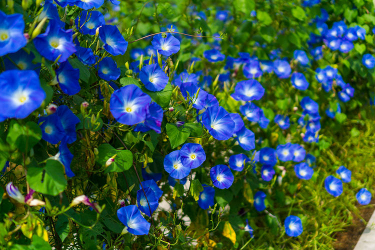Leaf Beauty In Nature Plant Blue Flower Purple Green Color Nature Outdoors No People Flower Head Trees And Nature Beauty In Nature Nature Growth