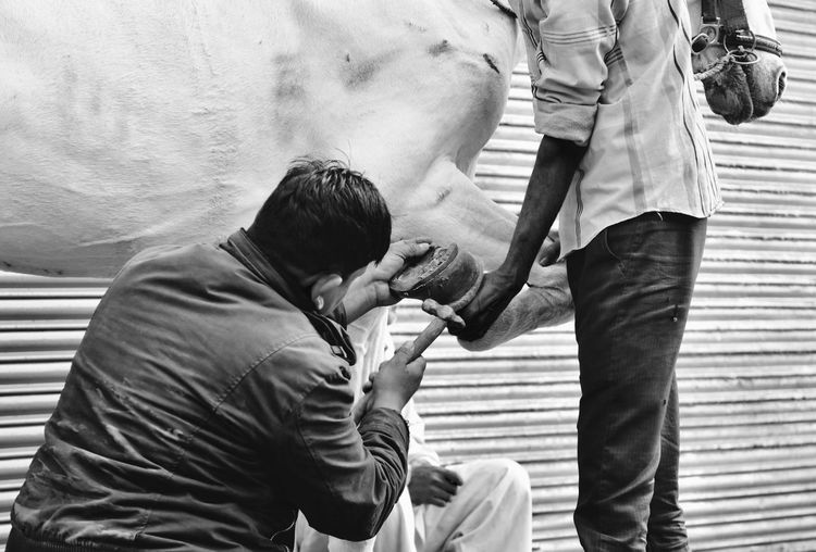 Man attaching shoe on horse