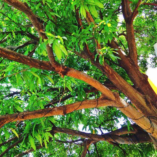 Todo se trata de como ves las cosas Walking Around árbol Mango Republicadominicana Filtro Tree And Sky Afrernoon Brake