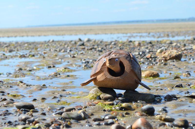 Turtle 🐢 Coconut Shell Water Beach Sea Sea Life Close-up Animal Themes Sky EyeEmNewHere