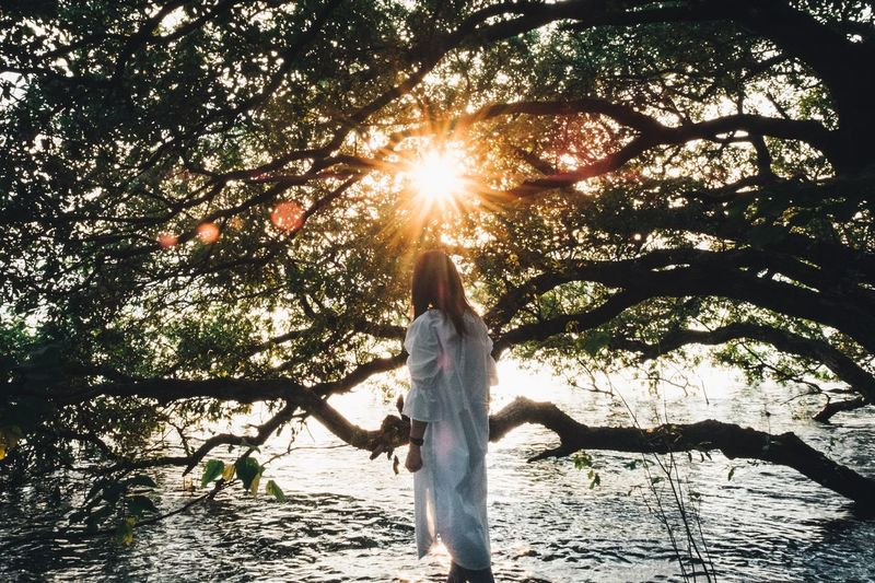 Sunlight Women Lifestyles Tree One Person Nature Real People Standing Beauty In Nature Lens Flare Leisure Activity Sky Plant Sun Rear View Sunbeam Adult Tranquility Water Human Arm