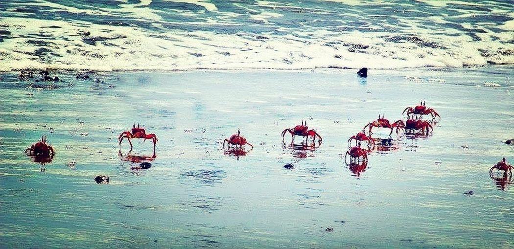 Beachphotography EyeEm Nature Lover Crabs