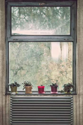 Nice, isn't it? Hotel Windows Flower Flowers Green Retro Vintage Radiator Window Close-up Potted Plant Residential Structure Pot Houseplant