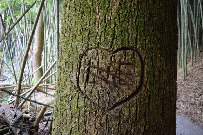 Broken heart... Broken Heart Carving Close-up Communication Text Tree Carving Tree Trunk Western Script Brokenheart Broken Dreams Broken Hearted