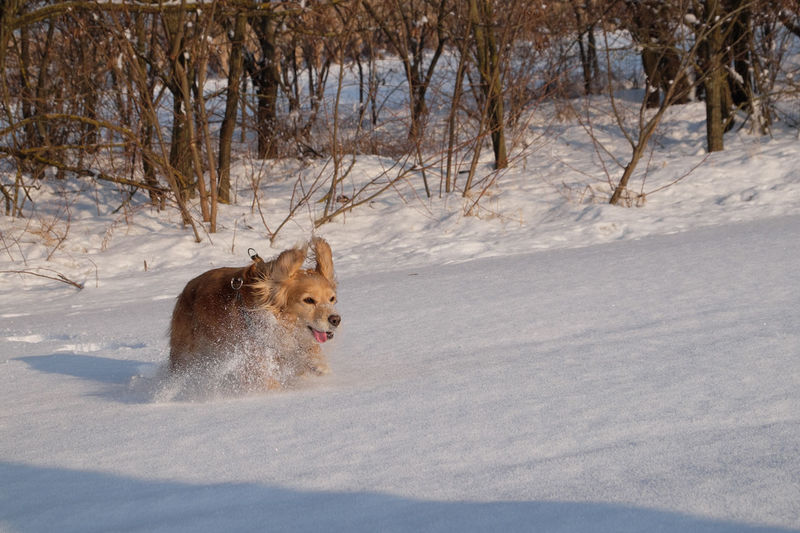 Dog in snow during winter