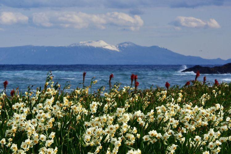 海辺の景色 海 アロエの花