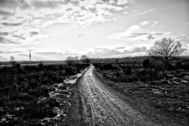 A walk into the nature Nature Walking Around Blackandwhite Eye4photography  Photography HDR EyeEm Best Edits Monochrome The Great Outdoors - 2015 EyeEm Awards Blackandwhite Photography