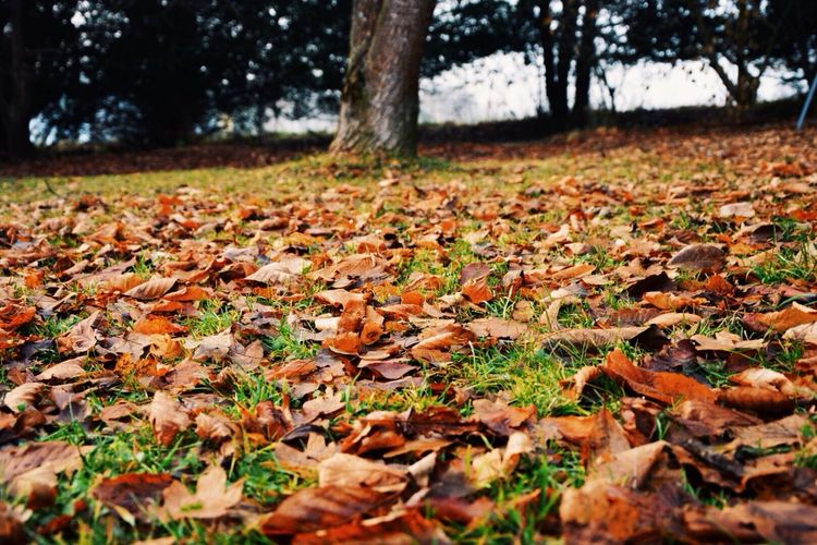 EyeEm Best Shots Colors Of Autumn EyeEm Nature Lover Nature_collection