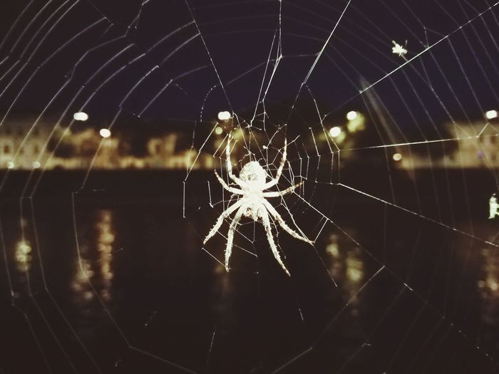 HUAWEI Photo Award: After Dark Web Spider Web Spider Backgrounds Close-up The Art Of Street Photography