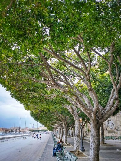 Siracusa Sicily Italy Travel Photography Travel Voyage Traveling Mobile Photography Fine Art Architecture Lined Benches Nature Lined Trees Mobile Editing The Great Outdoors With Adobe